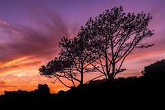 Newport Beach Silhouette (meeyak) Tags: beach silhouette dark moody sunset trees piratescove newportbeach newport coronadelmar cdm ocean rocks cliff harbor boats view meeyak sony 28mm a7r2 sonyalpha travel adventure outdoors vacation summer warm hot
