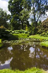 2017-06-18 Virginia Water Savill Gardens IMG_9054 (Darkstar Moody) Tags: virginiawater savillgardens plants flowers trees water ponds lakes wildlife gardens flora fauna