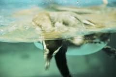 finding nemo (visualstorymaker) Tags: seoul korea fish findingnemo nemo filmphoto fuji meditation aquarium rest inspiration water underwater 물고기 한국 서울 코엑스 coex coexaquarium 물 후지 필름사진 영감 휴식 명상 니모 수족관