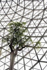 Under the Dome 06222017 (Orange Barn) Tags: thedomes mitchellparkdomes milwaukeewisconsin