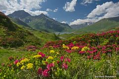 Printemps en Savoie. (yves floret) Tags: savoie hautemaurienne fleurs lac montcenis rhododendrons printemps montagne ciel nuages