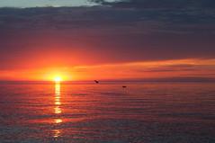 DSC_2407 (BrittanyKx3) Tags: sunset beach summer silhouette portelgin beautiful water