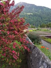 Grüne Alpentagung St. Gerold (library_mistress) Tags: stgerold vorarlberg walsertal groseswalsertal sanktgerold austria österreich alpenkonferenz alpentagung transnationalealpentagung gbw gruenebildungswerkstatt flower blume exterior