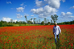 Papaveri Doc (Franco Vannini) Tags: papaveri colonnedelgrillo tuscany toscana summer estate poppies