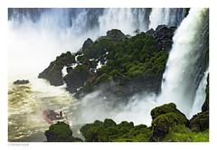 navegando en aguas tranquilas  (II) (héctoRcondE) Tags: 2016 agua arboles argentina brasil cataratas diciembre fauna flora iguazu misiones plantas rio selva viajes nikon d610