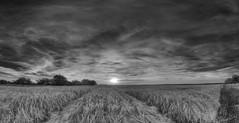 Sunset in Neverland (M-Z-Photo) Tags: ansbach bayern deutschland de hdr monochrome panorama sonnenuntergang schwarzweis felder spuren