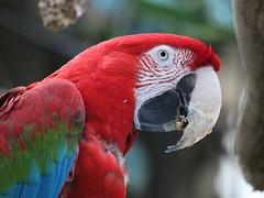 Parrot Head (Janet Tubb) Tags: bird niagarafalls ontario canada can parrot treasures