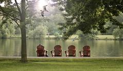 """Au bord du Lac ... ( P-A) Tags: adirondacks chaises repos lacdow fraicheur été chaleur beauté paix silence balade pistecyclable passant ombres verdure arbres ombre ottawa photos simpa© """"nikonflickraward"""" ~~atmosphere~~ photoquébec vivelevert"""