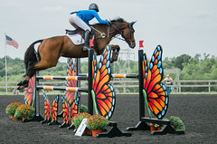 (onapaperplane) Tags: horse horses equestrian equine warmblood pennsylvania show plantation field jumping saddle cwd antares unionville cosequin