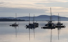 Oak Bay Marina - early morning (Paul Cottis) Tags: paulcottis may 2017 oakbay victoria vancouverisland 19 view