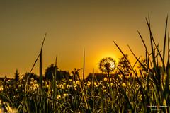 Sol de espinas (Antonio Camelo) Tags: nikon sky sol sunset sun photo puesta