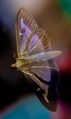 DSCF0940-2 (bc-schulte) Tags: xt20 fujinon 1650mm polaroid nahlinse 4 macro insekt motte