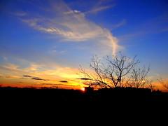 New York Sunset (dimaruss34) Tags: newyork brooklyn dmitriyfomenko image sky clouds trees sunset