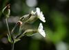 Un p'tit bokeh pour bien démarrer la journée !! (thierrymazel) Tags: fleurs flowers blossoms printemps spring profondeur champ pdc dof bokeh