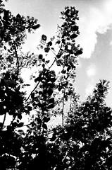 33050002 (sabpost) Tags: retro vintage scan film bw ussr ссср пленка сканирование скан негатив россия ретро old rare scans russia russian found photo siberia сибирь soviet