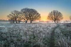 Frost (Dave Watts Photography) Tags: davewatts trees suffolk frost grass blue orange sunrise landscape essex riverstour calm peace mist winter
