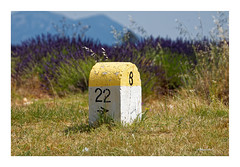 Plateau de Valensole - Lavendelroute D8 (Babaou) Tags: frankreich france südfrankreich provencealpescôtedazur provence alpesdehauteprovence paca lavendel lavande kilometerstein borne d8 valensole plateaudevalensole dxo