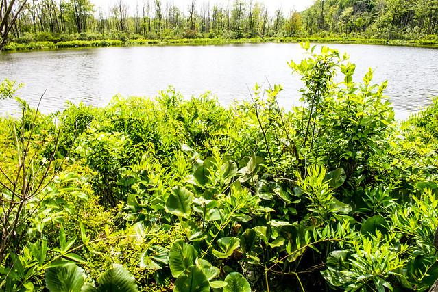 Spicer Lake Nature Preserve - July 4, 2017