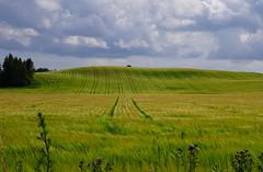 Landscape tracks