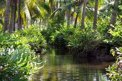 Backwaters (Shrimaitreya) Tags: kerala backwaters southindia india nature peace