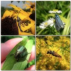 Summertime (Tölgyesi Kata) Tags: insect rovar summer nyár hand plant flower mozaik garden