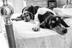 il mio staff antidepressione: (andaradagio) Tags: dogs cani miglioramicodelluomo andaradagio bianconero nadiadagaro canon 24mmf28canon bw