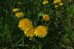 Wiosna (G.K. Porter. Artist Photographer) Tags: wiosna kwiaty krzewy kwitnące warszawa