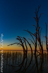 IMG_5433 (biglaptogs) Tags: barmera lakebonney riverland sa states sunsetsunrise