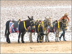 The Great British Seaside .. (** Janets Photos **) Tags: uk seaside beach sands donkeys lincolnshire cleethorpes