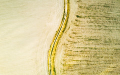 The Line That Divides (John Westrock) Tags: carnation washington unitedstates us aerial dronephotography djimavicpro field path pacificnorthwest