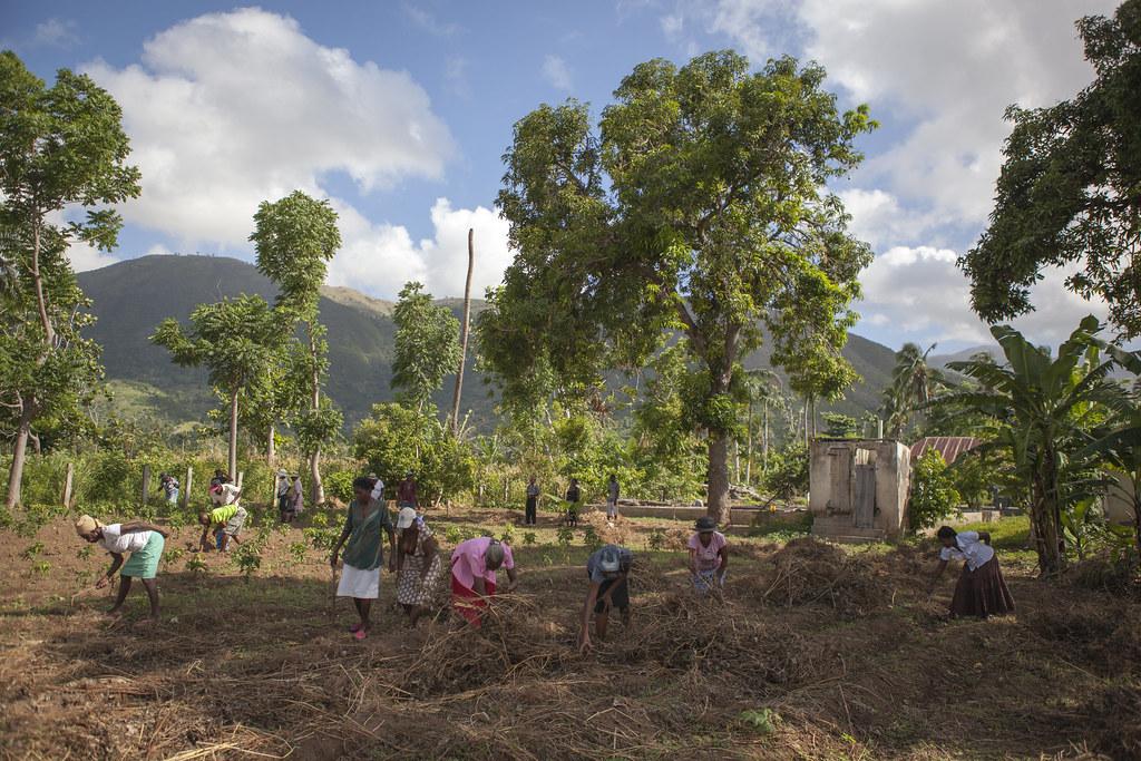 AVSF-HAITI-2017-TRISTANPARRY248