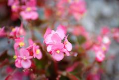 So much bokeh (ChristianRock) Tags: pentax k10d k10 sigma dc hsm art 30mm 30 f14 14 ccd garden nature summer