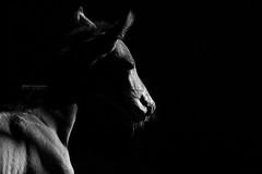 _6070188.jpg (www.jkm-photographie.com) Tags: jkmphotographie strasbourg julienkam bai poulain harrydulerchenberg hongre lerchenberg étalon jument obstacle gundershoffen saut haras cso