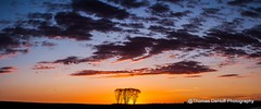 sunset pano (Thomas DeHoff) Tags: sunset panorama iowa red blue clouds tress sony a700