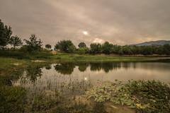 Reflejos. (Amparo Hervella) Tags: embalsedesantillana manzanareselreal comunidaddemadrid españa spain paisaje agua nube sol reflejo naturaleza planta árbol atardecer largaexposición d7000 nikon nikond7000 comunidadespañola