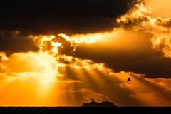 a new dawn (viktoria.czire) Tags: mexico playa del carmen ship seagull clouds sky sea beach caribbean sun sunglare beams sunrise nikon nikond5300 dslr playadelcarmen