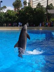 DSC00631 (jrucker94) Tags: vegas water dolphin swimming show secretgarden