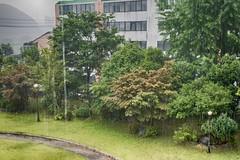 179/365 (Daegeon Shin) Tags: nikon d750 nikkor 55mmf28 rain lluvia catsanddogs laslluviastorrenciales rainyday díalluvioso 니콘 니콘렌즈 비 비오는날 폭우 억수같이 365 jinju corea korea 진주 경남 nature 자연