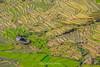 File574.0617.Trồng Tồng.Cao Phạ.Mù Cang Chải.Yên Bái. (hoanglongphoto) Tags: asia asian vietnam northvietnam northwestvietnam landscape scenery vietnamlandscape vietnamscenery vietnamscene terraces terracedfields terracedfieldsatvietnam transplantingseason sowingseeds afternoon sunny sunnyafternoon sunnyweather valley flanksmountain hdr canon canoneos1dsmarkiii canonef70200mmf28lisiiusmlens tâybắc yênbái mùcangchải caophạ phongcảnh ruộngbậcthang ruộngbậcthangmùcangchải thunglũng mùacấy đổnước mùacấymùcangchải đổnướcmùcangchải sườnnúi buổichiều nắng nắngchiều bóngđổ abstract trừutượng curve đườngcong home house nhà trồngtồng thunglũngcaophạ