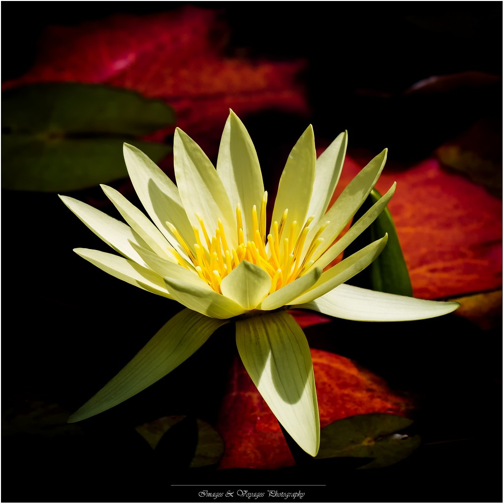 The Worlds Best Photos Of Lotus And Photoshop Flickr Hive Mind
