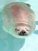 水族館56 (ののリサを信じろ) Tags: 水族館 白熊 カエル 蛙 シロクマ なまはげ 獅子舞 神社 桜 鯉のぼり アシカ
