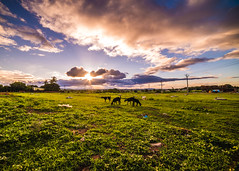 Magical sunset at Dandeli (ashwin647) Tags: nature naturelovers indiapictures india landscape green trees goat sheperd dandeli karnataka villiage