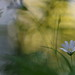 Meadow's Dream 2