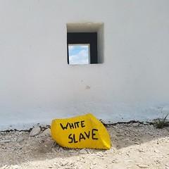 White Slave (R13X) Tags: bonaire underwaterphotography underwatermacrophotography scubadiving diving denlaman dutchcaribbean dutchislands shorediving nikon nikon105mm nikon60mm d7200 whiteslave barireef somethingspecial saltpier torisreef