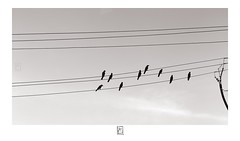 Perched (krishartsphotography) Tags: krishnansrinivasan krishnan srinivasan krish arts photography fineart monochrome perched birds silhouette electricwire symphony musical trichy kaveribridge tamilnadu india