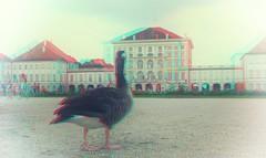 Schlossgans / Castle goose 3d anaglyph (Chridage) Tags: gans goose schloss schlosspark nymphenburg