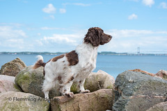 27/52 ZigZag 2017 (Flemming Andersen) Tags: bridge pet nature water dog outdoor animal 52weeksfordogs stones hund fredericia fredericiamunicipality denmark dk
