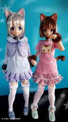 Pure Neemo Meow × Meow Alisa and Maya (Nyx ☆) Tags: azone pure neemo sahra meow alisa maya