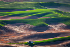 Figure Eights (Hilton Chen) Tags: palouse steptoebutte spring colfax washington wheatfields sunset lines garfield unitedstates us