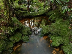 Mossy Creek in the Kawhaka Forest (New Zealand Wild) Tags: aotearoa newzealand newzealandwild nature newzealandnature wild wildnewzealand westcoast wilderness wildaotearoa kawhakaforest okuku turiwhate kumara stevereekie photography landscape foreststream forest rainforest creek newzealandnaturephotography newzealandgeographic nationalgeographic vista view stunning scenery